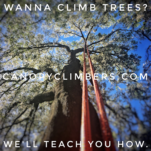 Canopy Climbers. Climb Trees Today.